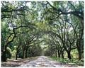 Oak Alley-Wormsloe Plantation